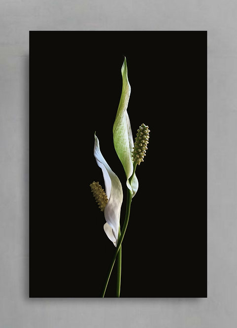 Peace Lilies ~ Dark and Moody Floral Wall Art therandomimage.com