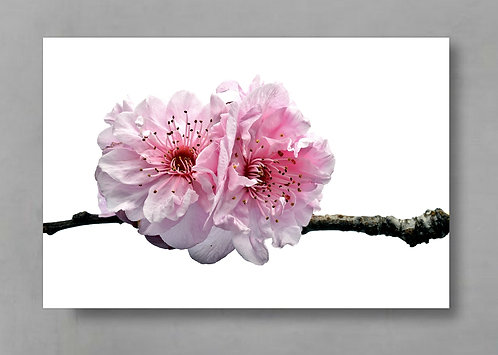Two Cherry Blossoms - Spring Inspired Wall Art therandomimage.com