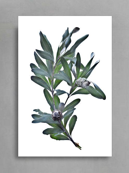 Banksia Stem ~ Australian Printable Art therandomimage.com