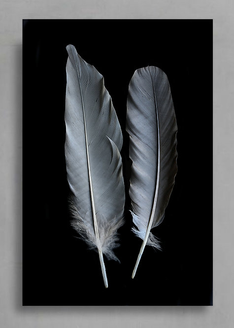 grey feathers contemporary wall art therandomimage.com
