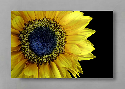 Sunflower Still Life ~ Macro Photography Print ~ Yellow Floral Wall Art therandomimage.com