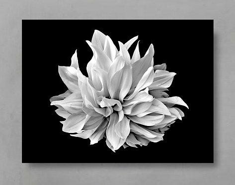Black And White Dahlia ~ Floral Wall Art therandomimage.com
