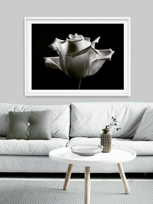 Black and White Rose ~ Printable Digital Download
