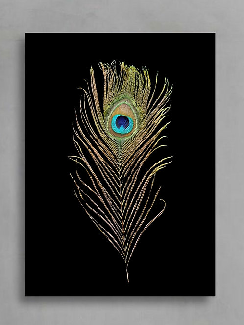 Peacock Feather ~ Digital Download therandomimage.com