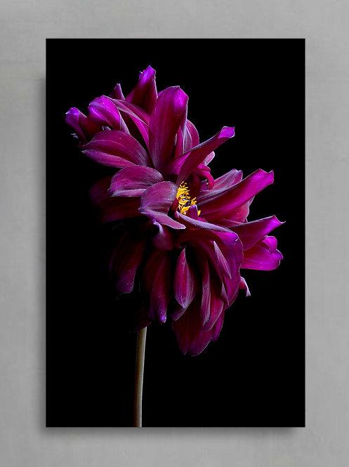 Magenta Dahlia Flower ~ Printable Digital Download therandomimage.com