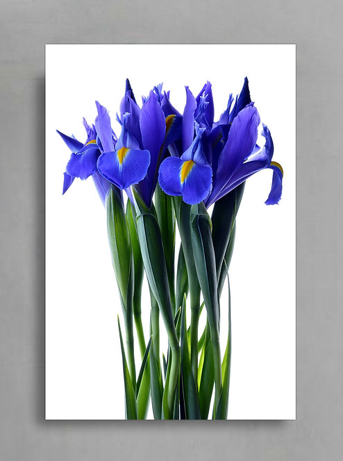Blue Iris Bouquet ~ Colourful Floral Wall Art therandomimage.com