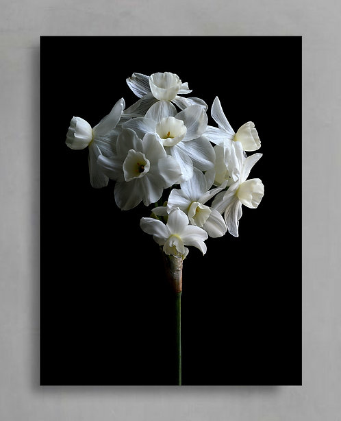 Jonquil ~ Moody Floral Wall Art therandomimage.com