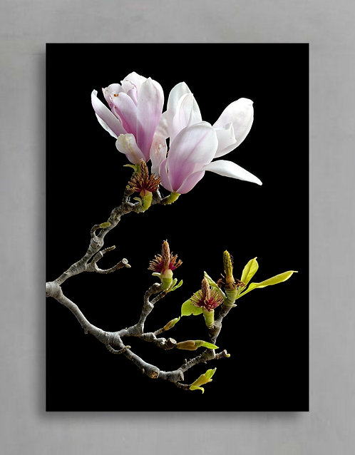 Pink Magnolia Branch ~ Pretty Floral Wall Art therandomimage.com