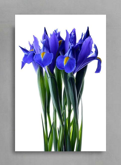 Blue Iris Bunch ~ Flower Photography Print therandomimage.com