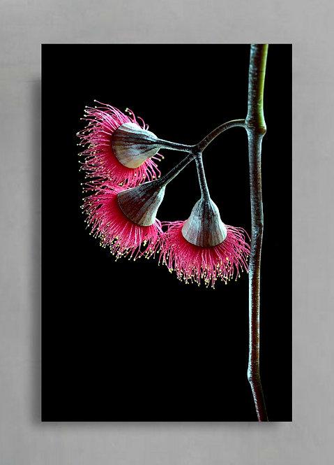 Rebellious Princess ~ Australian Floral Art ~ Eucalyptus Blossom Artwork therandomimage.com