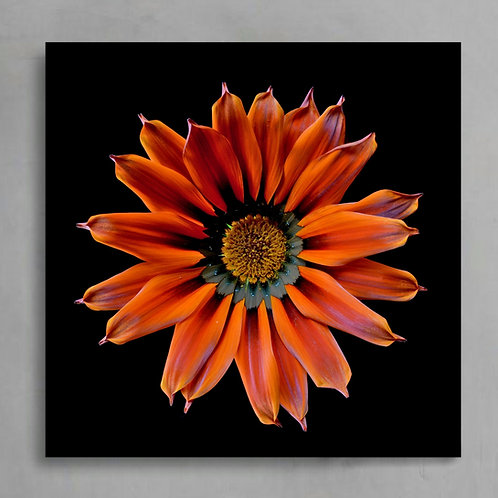 Orange Daisy Flower Art ~ Bright floral fine art photography print therandomimage.com