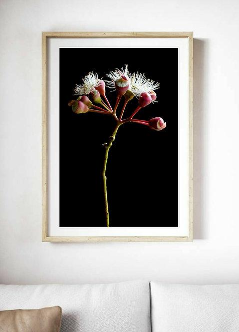 flowering gum Australian native floral print therandomimage.com