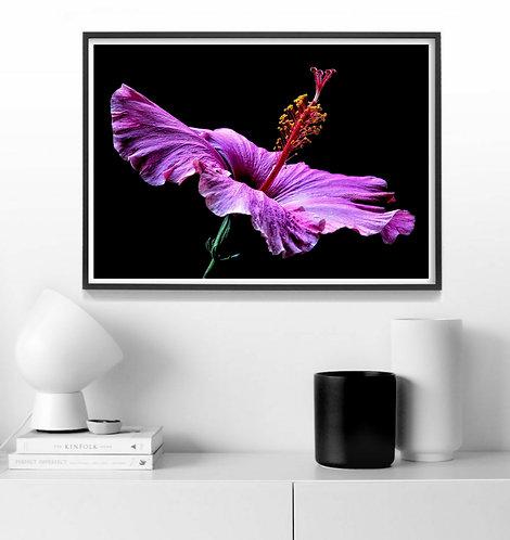 Pink Hibiscus ~ Horizontal Floral Wall Art therandomimage.com