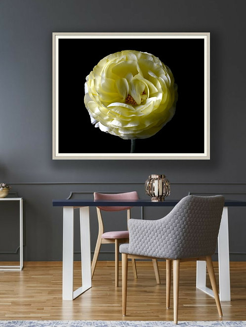 Ivory Ranunculus ~ Floral Wall Art Print therandomimage.com