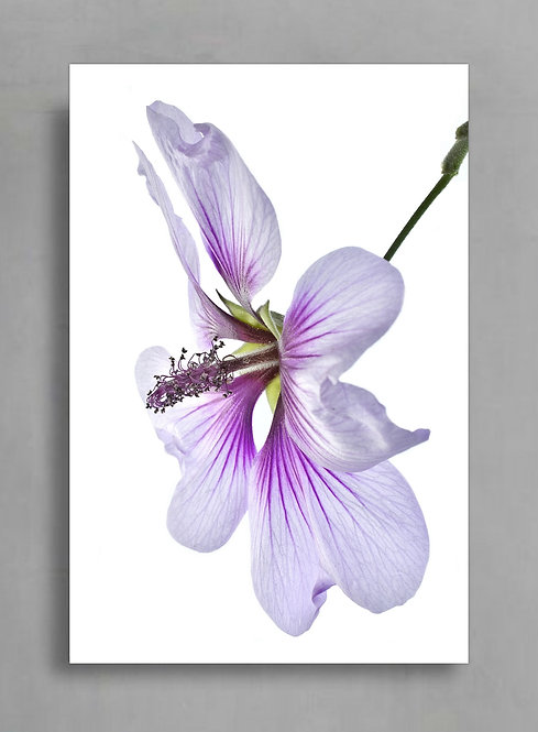 Hibiscus ~ Printable Digital Download therandomimage.com