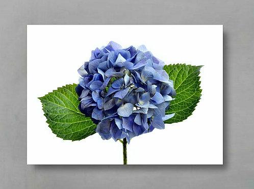 Blue Hydrangea ~ Printable Digital Download therandomimage.com