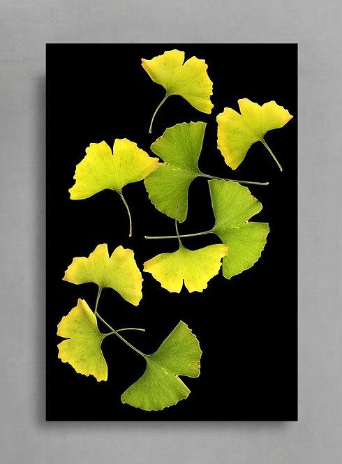 Ginkgo Leaf Collage ~ Large Botanical Wall Art ~ Nature Photography Print therandomimage.com