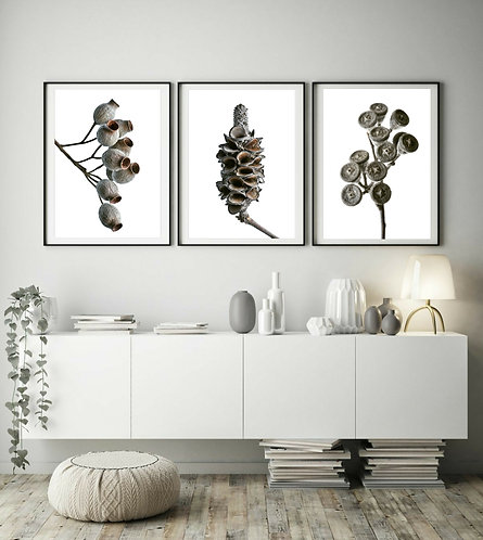 seed pods triptych set of 3 australian native flora prints therandomimage.com