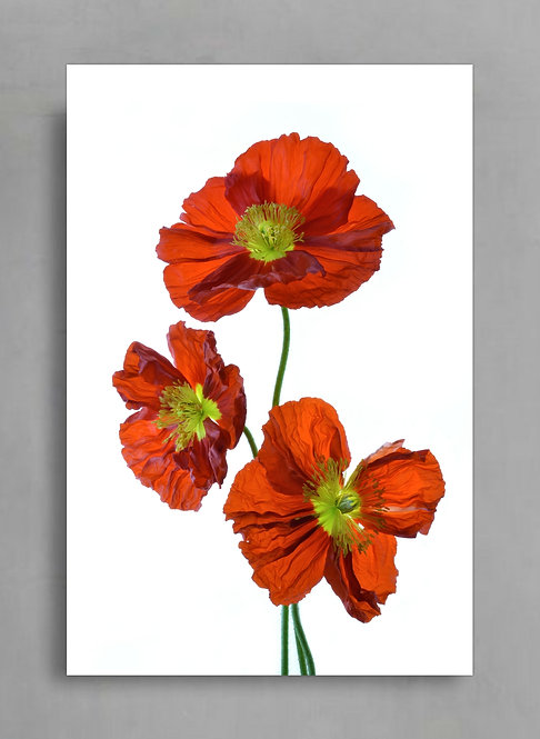 Three Red Poppies ~ Digital Download therandomimage.com