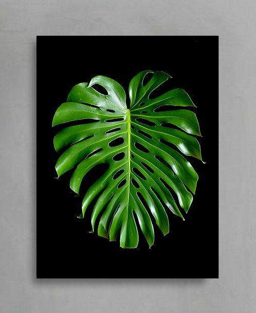 Monstera Leaf ~ Tropical Plant Photography Print therandomimage.com