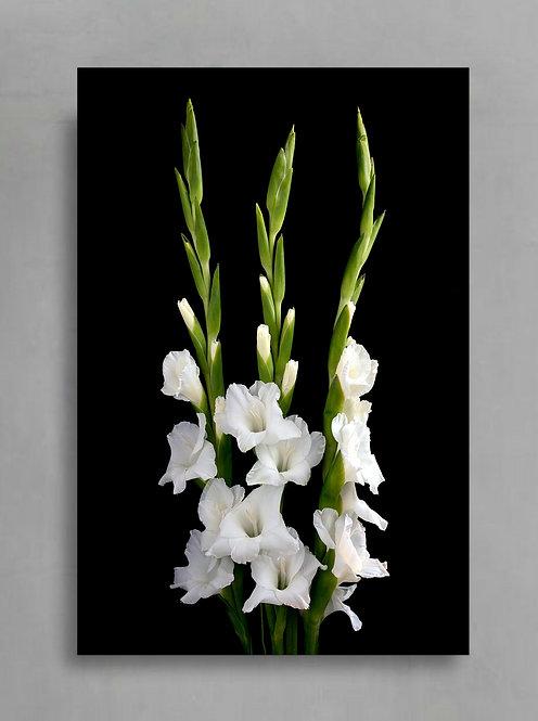 White Gladiolus ~ Elegant Floral Wall Art Print therandomimage.com