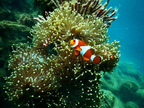 ClownFish_PEX.jpg