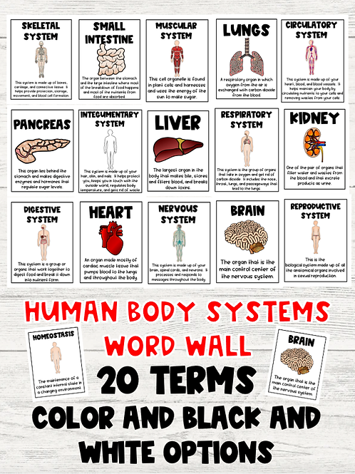 Human Body Systems Word Wall: Color and Black and White Versions