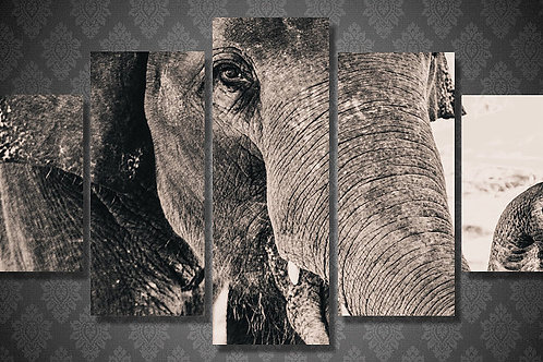 Black and White Elephant - 5 Piece Canvas Set