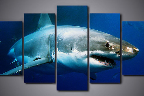 Shark - 5 Piece Canvas Set