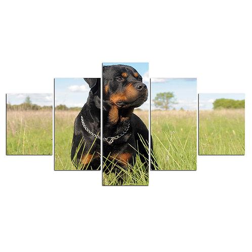 Rottweiler - 5 Piece Canvas