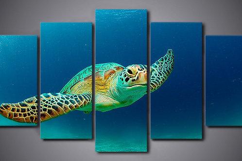 Sea Turtle - 5 Piece Canvas Set