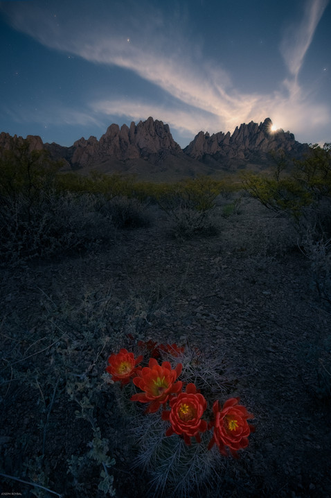 Organs, New Mexico