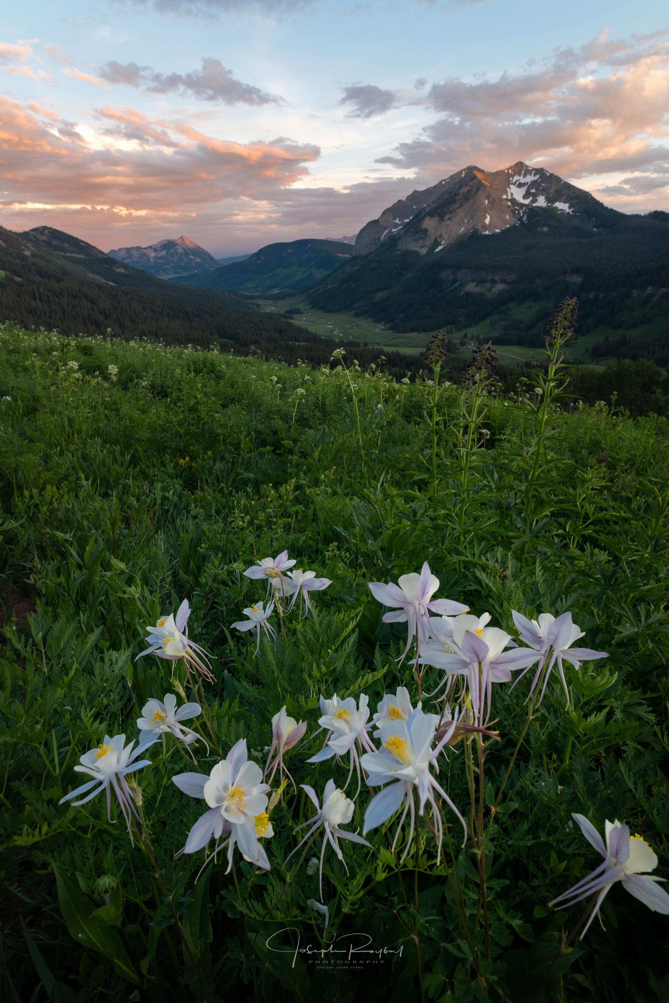 CB_Wildflowers_LowRes-1