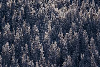 JR_Landscape_Samples--45.jpg
