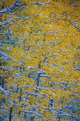 JR_Landscape_Samples-5247.jpg