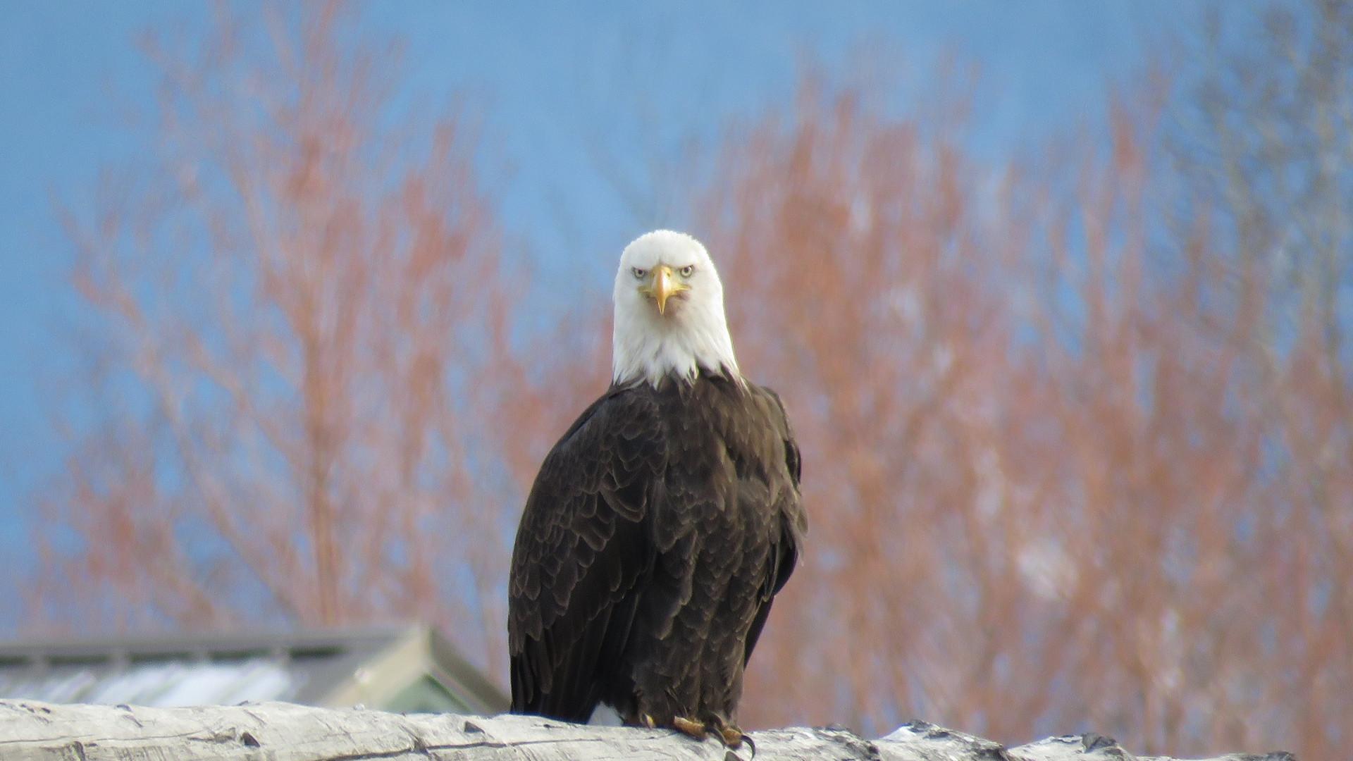 grand-teton-national-park-guided-tour-ba