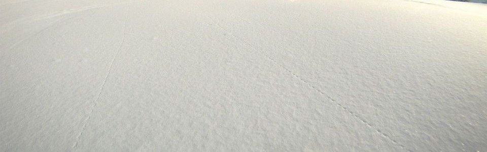 Ski-Powder3.jpg