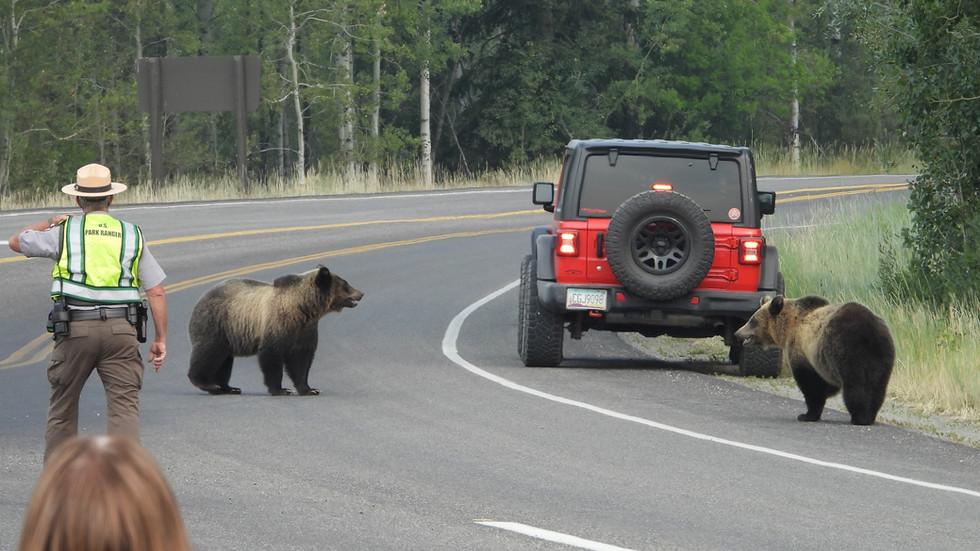 grand-teton-tour-grizzly-bear-310.jpg