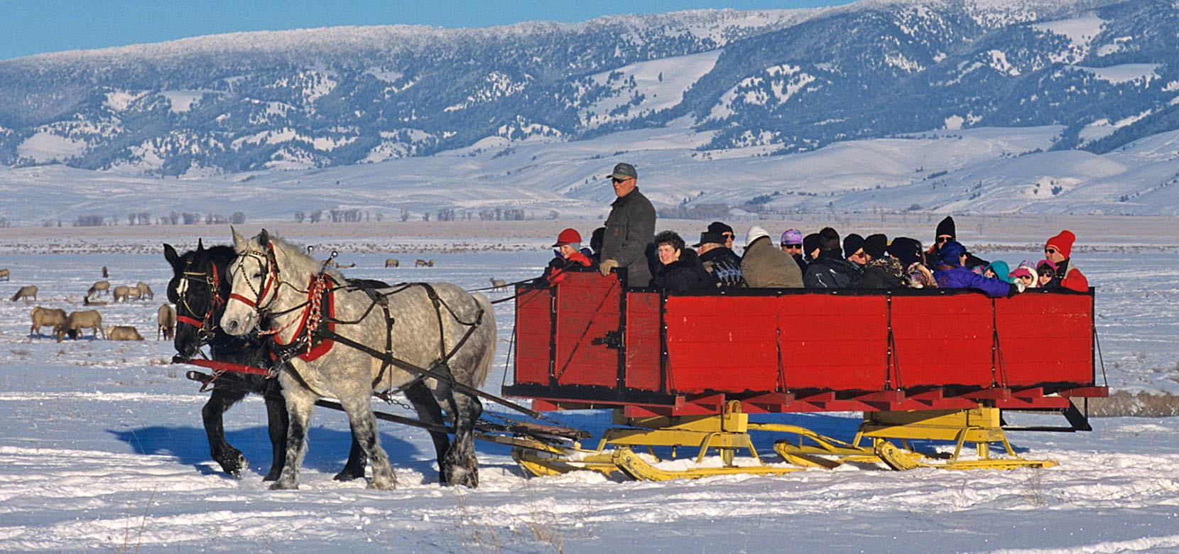 Jackson-hole-wildlife-tour-sleigh-rides.
