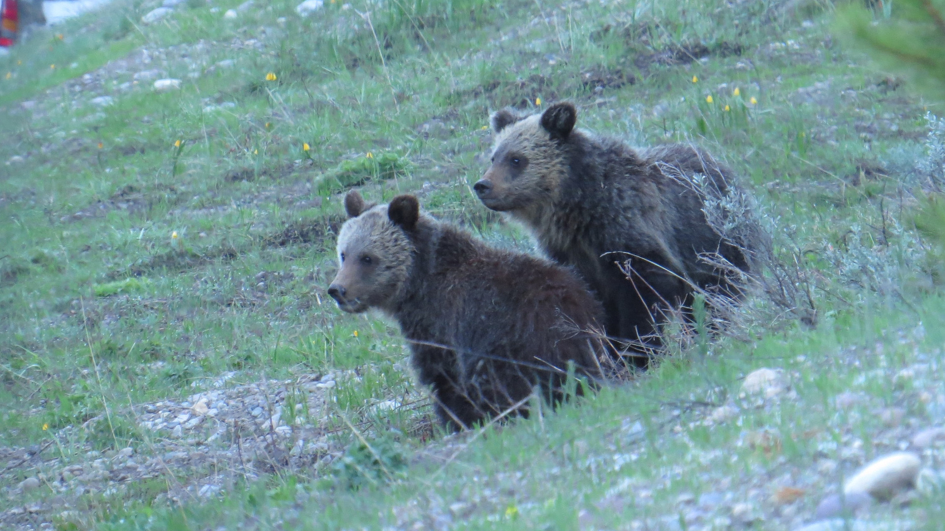 grand-teton-national-park-Tour-Grizzly-B