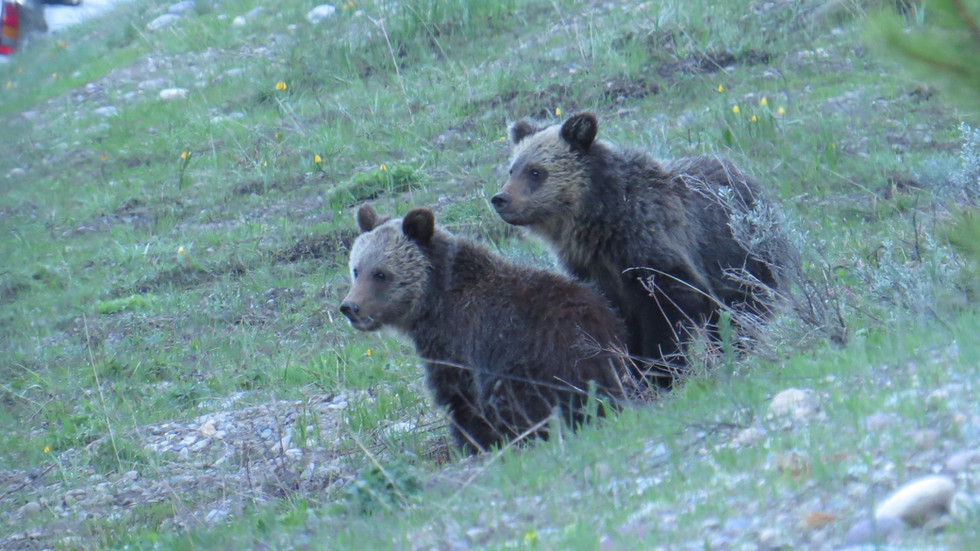 grand-teton-national-park-Tour-Grizzly-B