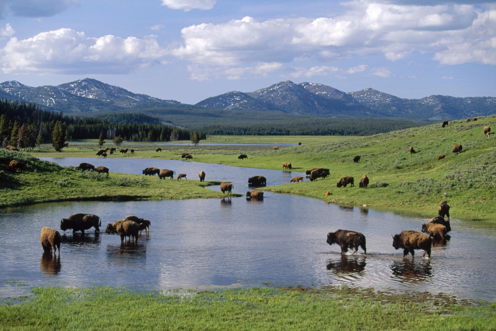 yellowstone-national-park-tours.png