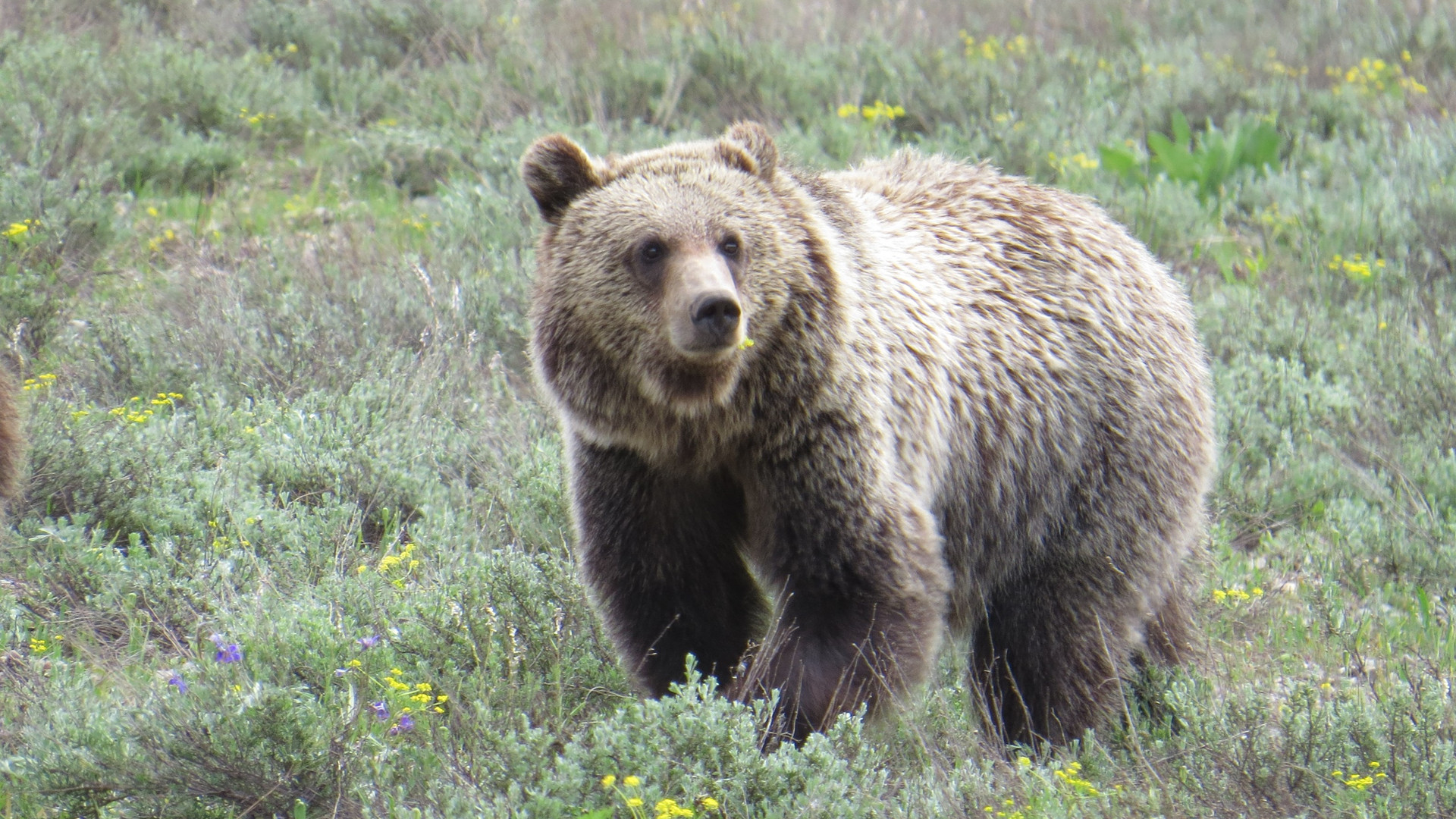 grand-teton-national-park-tour-bear-399-