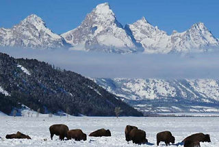 wildlife-tour-jackson-hole-tetons.jpg