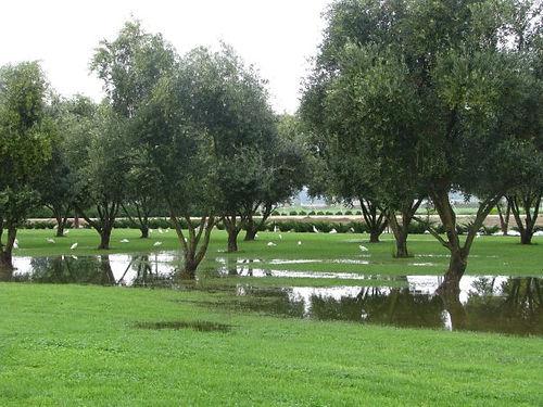 green fields.jpg