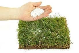 Fertilización (  la importancia de ella en la vida de las plantas )