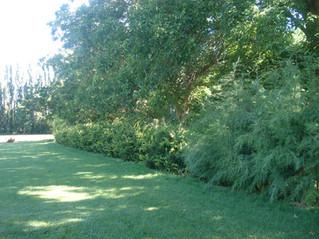 Cómo evitar el crecimiento de las malas hierbas