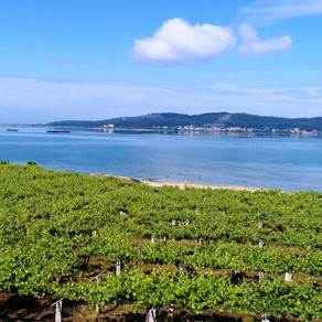 A Modern Day Wine Crusader | Q&A w/ Sonia Costa, from Lagar de Costa,  Galiza, Spain