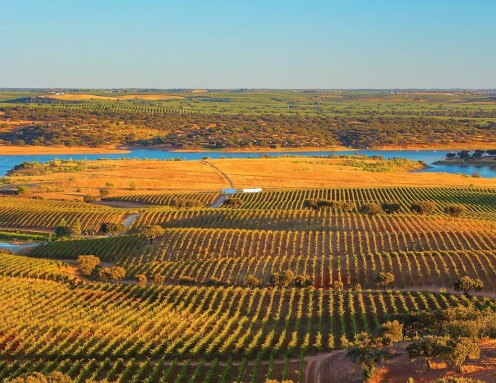 Alentejo Portugal wines Winemaking & Winemakers Herdade do Sobroso