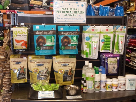 Easy & Effective Ways to Take Charge of Your Pet's Dental Health